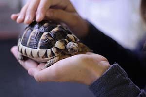 Turtle in hands